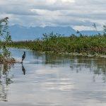 Скадарское озеро. Нырок