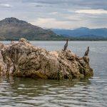 Скадарское озеро - птичий заповедник